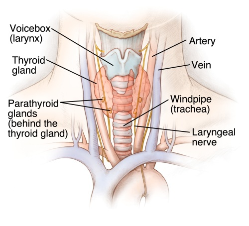 Thyroid Nodules Thyroid Cancer Ucla Endocrine Center Los