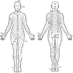 Dermatome Map showing skin innervations of the nerver roots