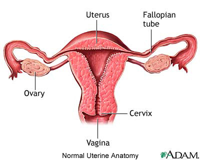 Normal uterine anatomy and recurrent pregnancy loss