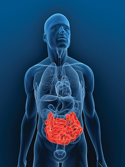 intestinal transplant research